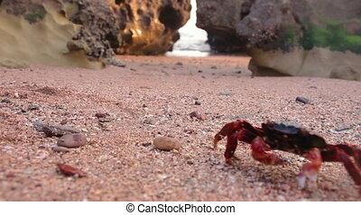 iran, pierres plage, en mouvement, sablonneux, île, coucher soleil, hormuz, rouges, crabe