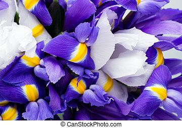 iris, printemps, patern., fond, floral, fleurs