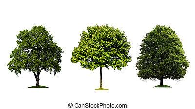 isolé, arbres, arrière-plan vert, frais, blanc
