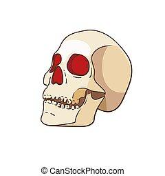 isolé, fond, vecteur, blanc, crâne