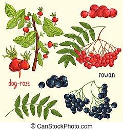 isolé, fruit, mélange, vecteur, illustration, frais