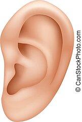 isolé, illustration, oreille, humain