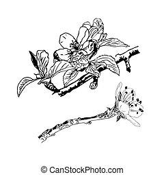 isolé, réaliste, blanc, arrière-plan., fleur cerise