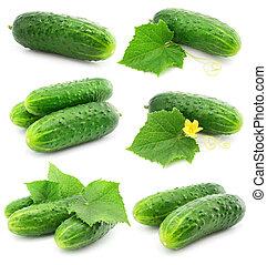 isolé, vert, pousse feuilles, fruits, légume, concombre