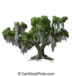 isolated., chêne, vecteur, arbre, illustration