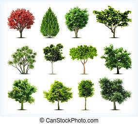 isolated., ensemble, arbres, vecteur