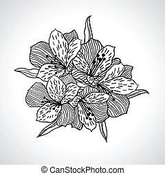 isolated., macro, fleur, noir, orchidée