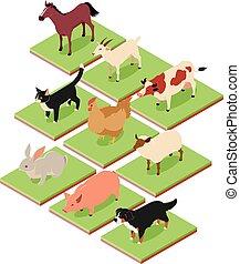 isométrique, animaux, conjugal