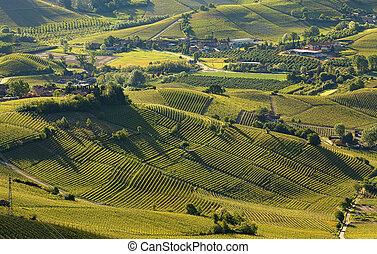 italie, collines, printemps, langhe, tôt, vignobles, vert, (view, piémont, above)., matin