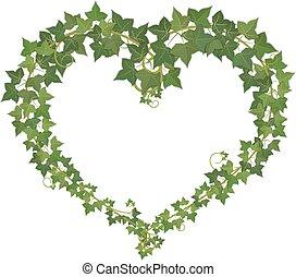 ivy., coeur, symbole, formé