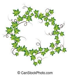 ivy., vecteur, vert, illustration