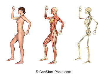 jambe, anatomique, overlays, -, femme, armer courbé