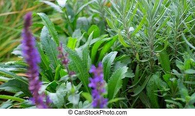 jardin fleur, buisson, fleurir, rose, champ, parterre fleurs, rose, lilas