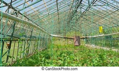 "jardin, interior"", ""greenhouse"