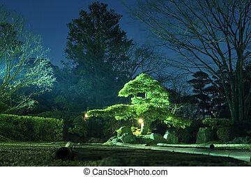 jardin, nuit