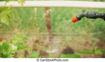 jardinier, vigne, asperge