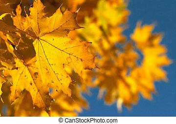 jaune, 2, branche
