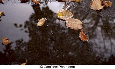 jaune, baissé, feuilles automne, flaque