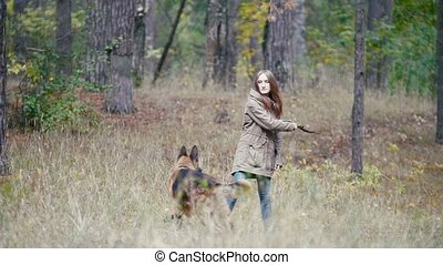 jeté, berger, courses, femme, -, jeune, chien, forêt automne, jouer, crosse