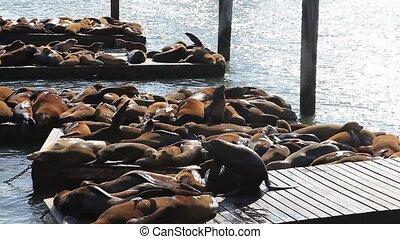 jetée, 39, lions, mer