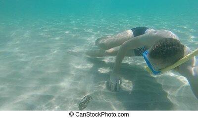 jeune, masque, nage, sous-marin, snorkel, crabe, homme, barbu, rencontre