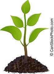 jeune, plante verte