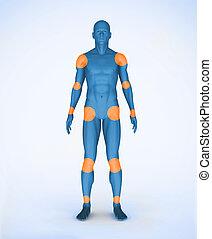 joints, numérique, corps