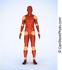 joints, numérique, rouges, squelette