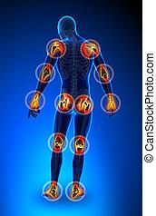 joints, -, trauma, douleur