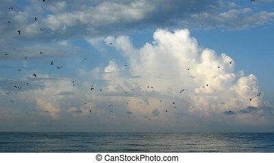jonc, nuages, lapse., sur, ciel, rapidement, sea., temps