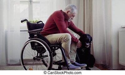 jouer, chouchou, fauteuil roulant, intérieur, handicapé, chien, personne agee, home., homme