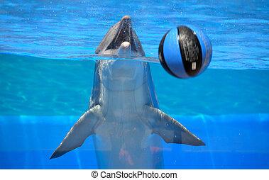 jouer, dauphin