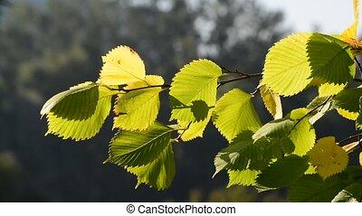 jour, orme, vent, feuilles, ensoleillé