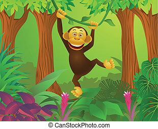 jungle, chimpanzé