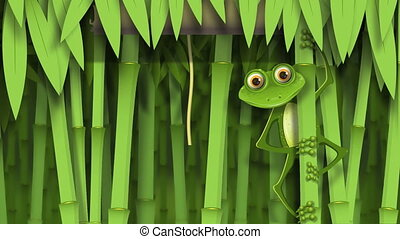 jungle, grenouille