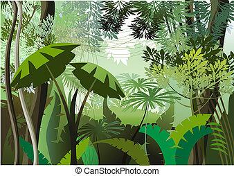 jungle, jour