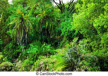 jungle, ouest, buisson, arbres, fond, afrique., kenya, tsavo