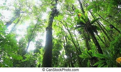 jungle, rainforest