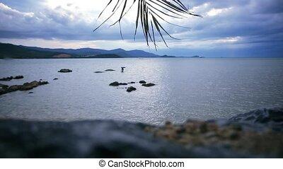 koh, branche, ciel, mer, nuageux, onduler, thailand., paume, fond, hd., plage, samui., 1920x1080