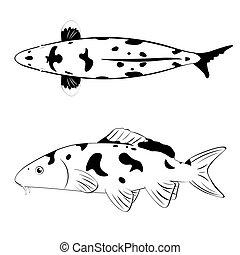 koi, blanc, noir, fish