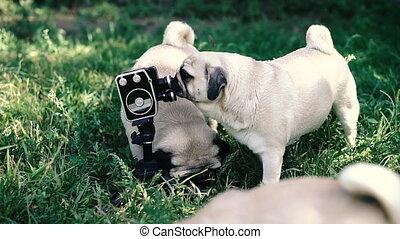 lécher, chiens, appareil-photo., retro