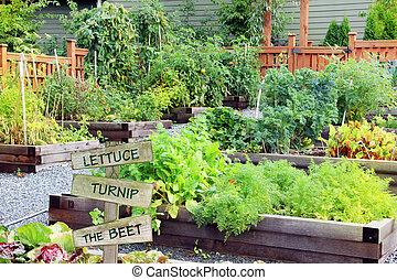 légume, garden., aromate