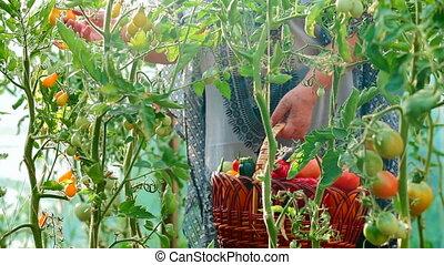 légumes frais, jardin