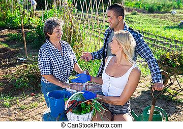 légumes, récolte, mûre, jardin, famille, heureux