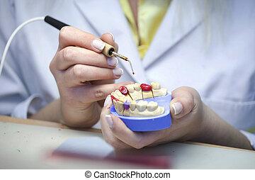 laboratoire, dentaire