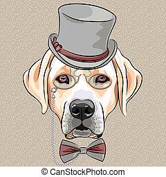 labrador, race, chien, vecteur, hipster, sérieux, dessin animé, retriever