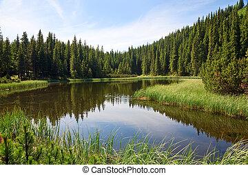 lac, montagne, forêt, été