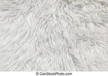 laine, détail, mouton, arrière-plan., fourrure