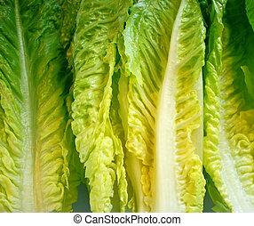 laitue romaine, feuilles