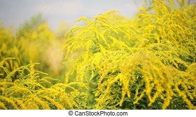 landscaping, flowerbed., wildflowers, parc, jaune